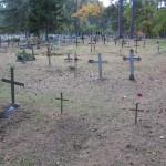 Ristid Kihnu kalmistul